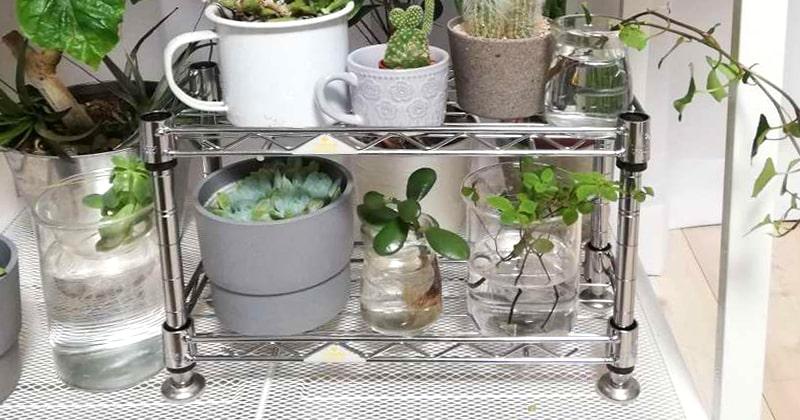 サボテンなどの小さな観葉植物に「ルミナスミニラック」